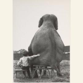Mijn vriend de olifant