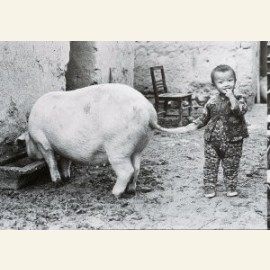 The family Pig, china, 1988