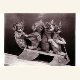 Katjes op slee