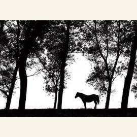 Kalmte (Een paard en hoge bomen op een eenzame plek)