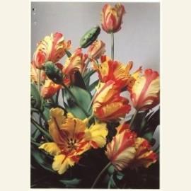 Flowerpower no. 3