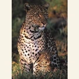 Les Bebes de la Savane Africaine