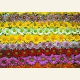 Flowerpower no. 37