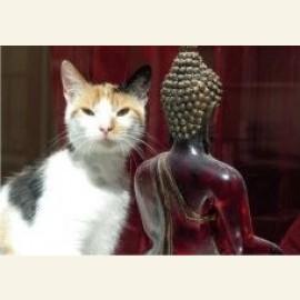 Oriental look, 2005