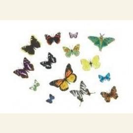Butterflies, 2002