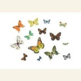 Butterflies, 2003