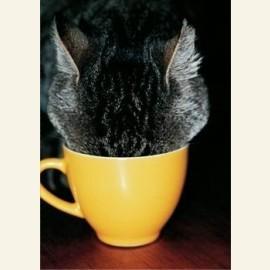Kattenkop, 2007