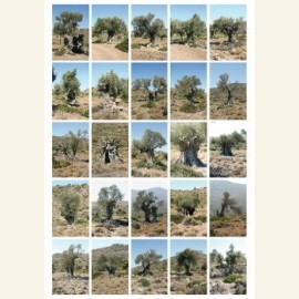 Portraits of olive