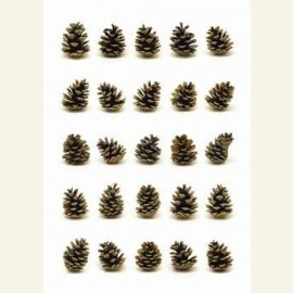 Portraits of pinecones