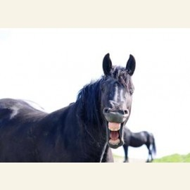 Lachend paard, 2010