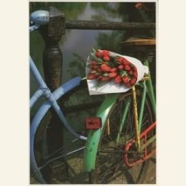 Tulpen uit Amsterdam II