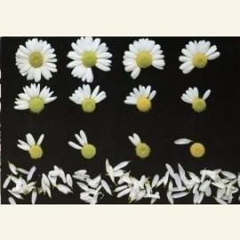 Flowerpower no. 48