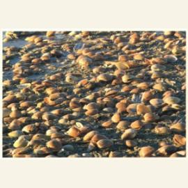 Terschelling (Kokosnootschalen in het modderige water)