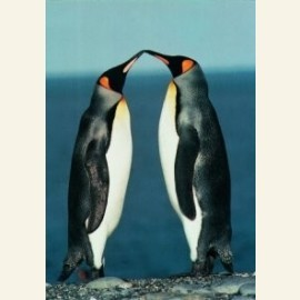 The lovers of antartica