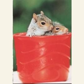 M.Hollist/Orphan squirrels