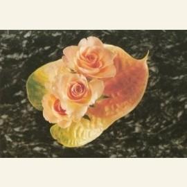 Rosae & Anthurium