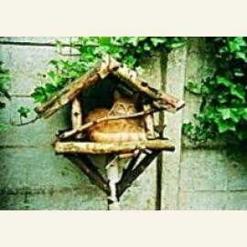 Kat in vogelhuisje