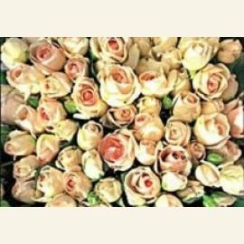 Flowerpower no.22