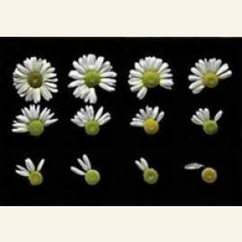 Flowerpower no. 36