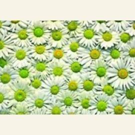 Flowerpower no. 35