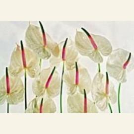 Flower power nr.67