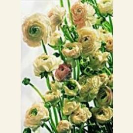 Flower power nr.69