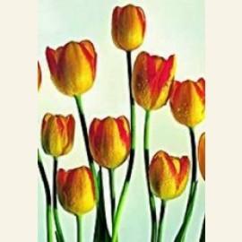 Golden Tulip II